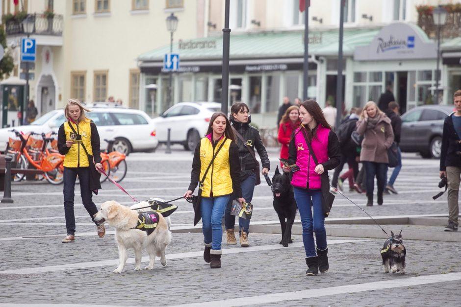 Sostinėje praeivius su Tarptautine gyvūnų diena sveikino šunys