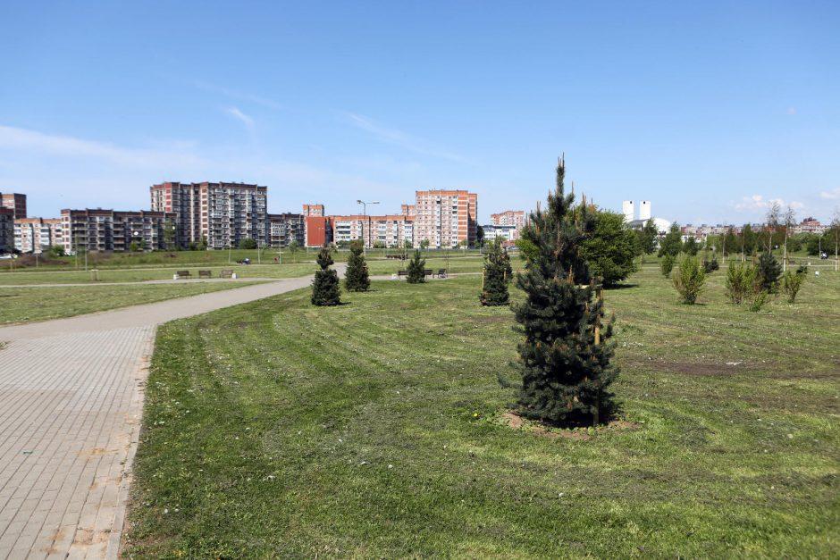 Už medį parke – 500 eurų