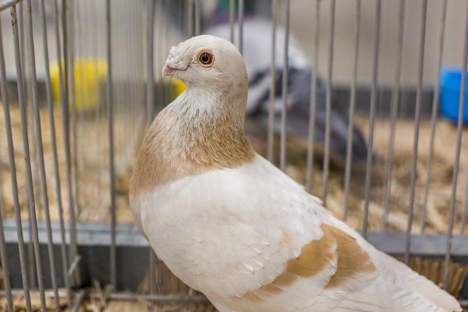 Kaunietis apie sparnuotus taikos simbolius: jie sektinas pavyzdys mums
