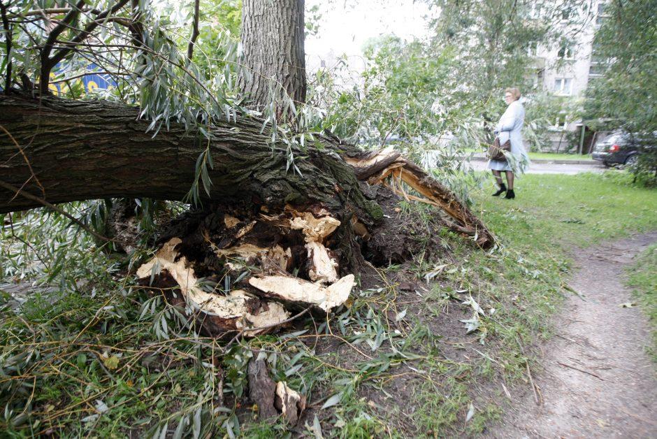 Skaičiuojami nuostoliai: medis suniokojo 22 tūkst. eurų kainavusį BMW