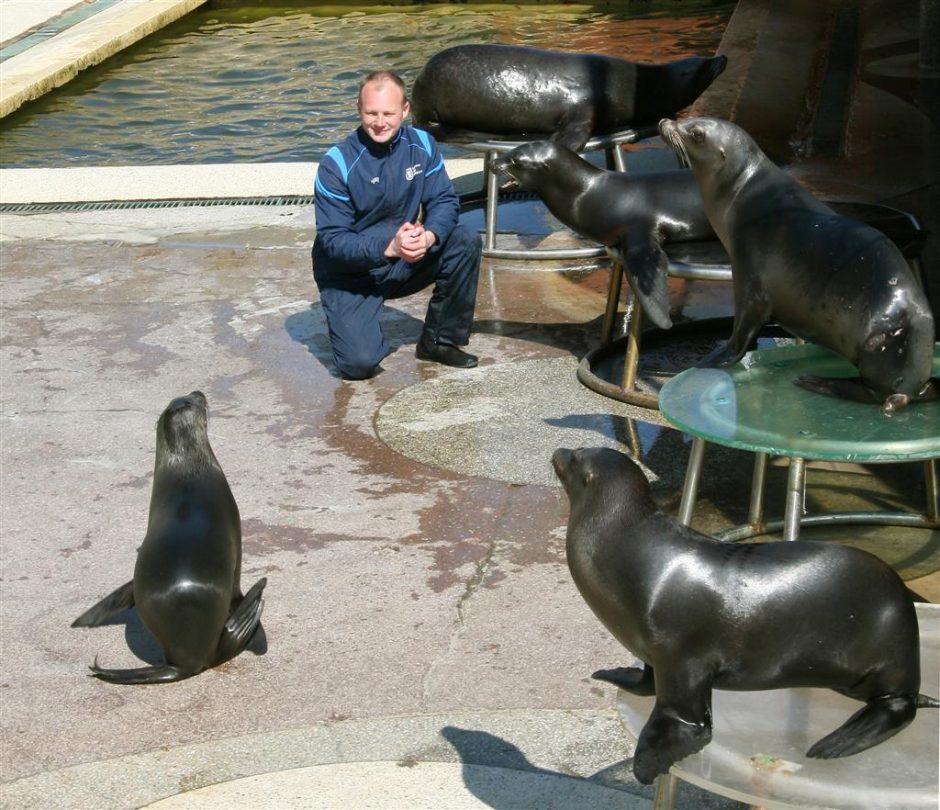 Jūrų muziejuje – nemokami Kalifornijos jūrų liūtų pasirodymai