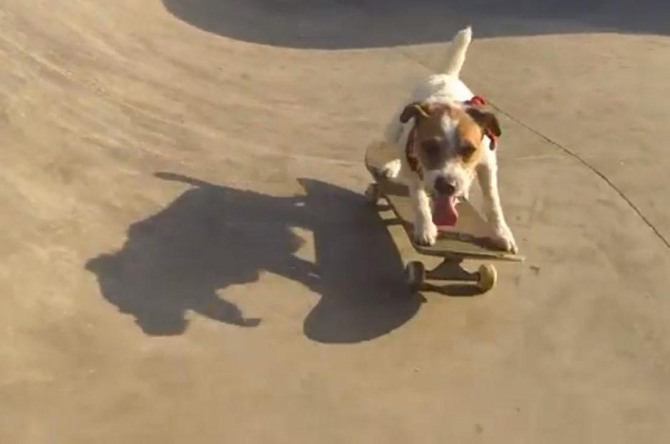 Šuo su riedlente atlieka