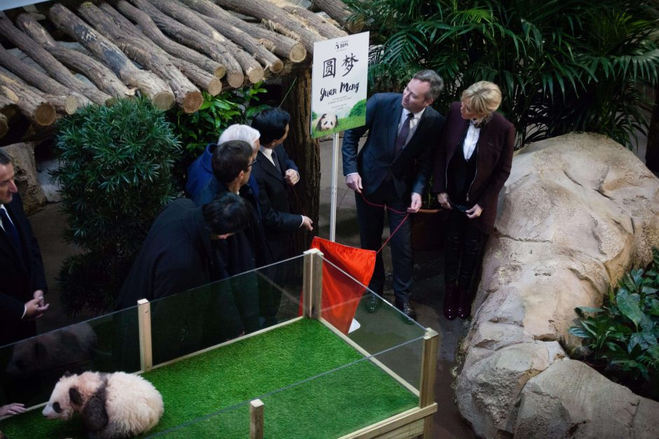B. Macron aplankė pirmąją Prancūzijoje gimusią pandą