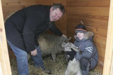 Prakartėlėje Rotušės aikštėje apsigyveno avytės
