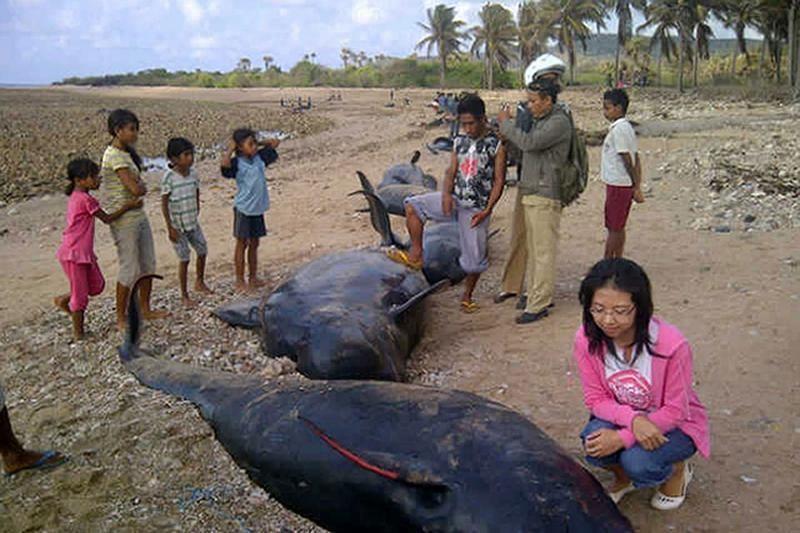 Indonezijoje dorojamos dešimtys žuvusių delfinų (foto)