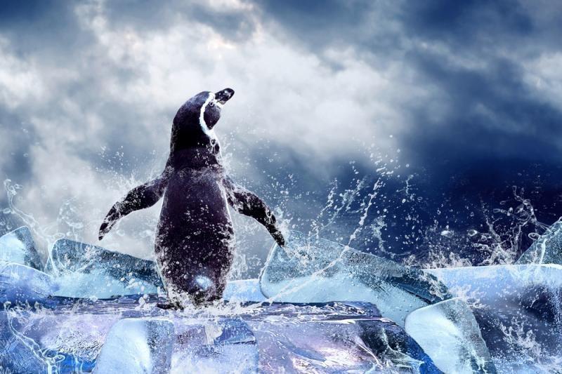 Pingviną pagrobusiems britams skirtos baudos