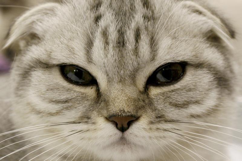 """Gyvūnų mylėtojus įsiutino parduodami kailiniai """"iš kačių kailio"""""""