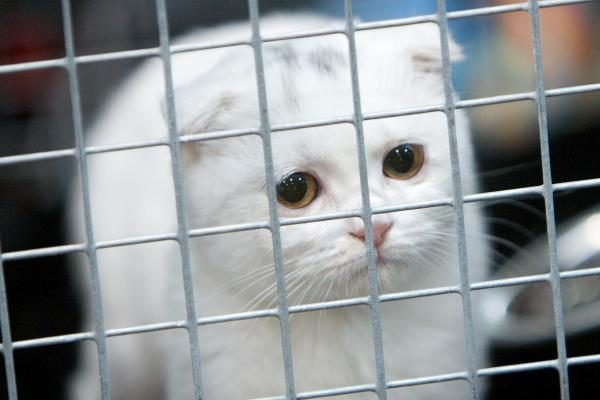 Per pusmetį gauta 550 pranešimų dėl žiauraus elgesio su gyvūnais, pusė jų pasitvirtino