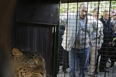 Drąsuolis V.Putinas nebijo ir leopardų