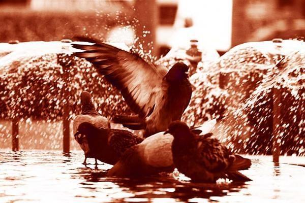Paukščiai jau kelia sparnus