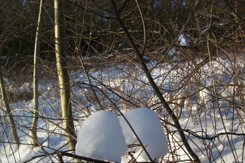 Šalčininkų miškuose rastas nušautas jaunuolis