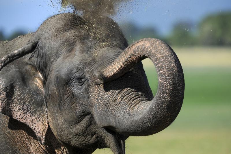 Nufilmuota širdį griebianti drambliuko gelbėjimo operacija