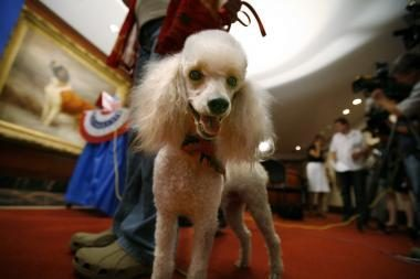 Kokį šuniuką savo dukroms išrinks B.Obama?