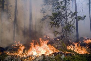 Miškuose - aukščiausios klasės gaisringumas