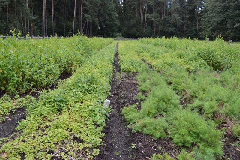 Vystyti miškų ūkius padeda Europos Sąjungos parama