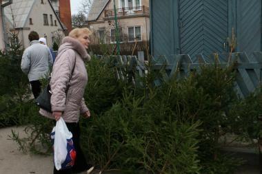 Prekyba kalėdinėmis eglutėmis jau prasidėjo