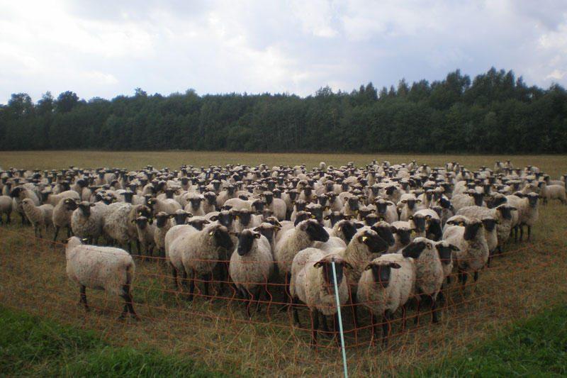 Nykstančios gyvulių rūšys populiarinamos pasitelkus paramą