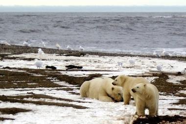 Rusija nusitaikė į Arkties turtus