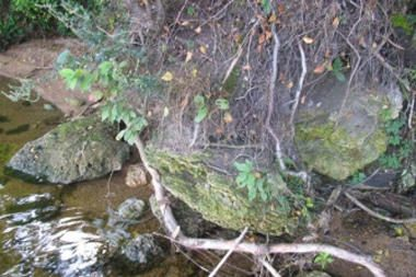 Pašešuvio kraštovaizdžio draustinyje – retas gamtos darinys
