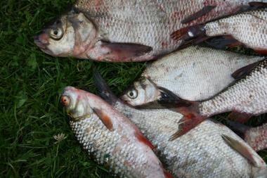 Tiškevičių įkurtų žuvivaisos tvenkinių kol kas neprivatizuos