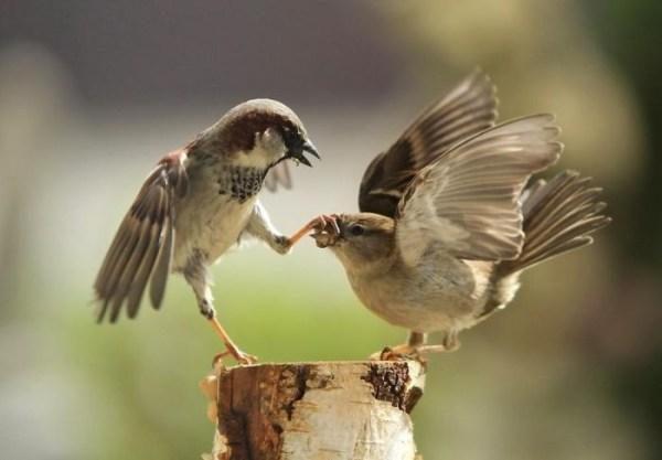 Ornitologai: paukščiai, kaip ir žmonės, blogų orų nemėgsta