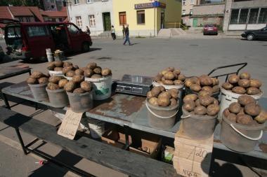 Bulvių pasėlių sumažėjo, tačiau derlius bus geras