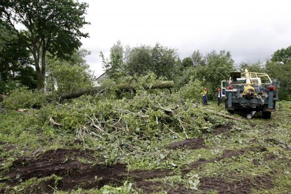 Dėl vėjovartų gali kilti grėsmė greta esantiems miškams