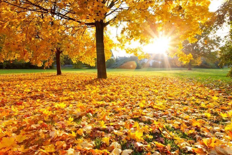 Ilgasis savaitgalis džiugins saulėtais orais