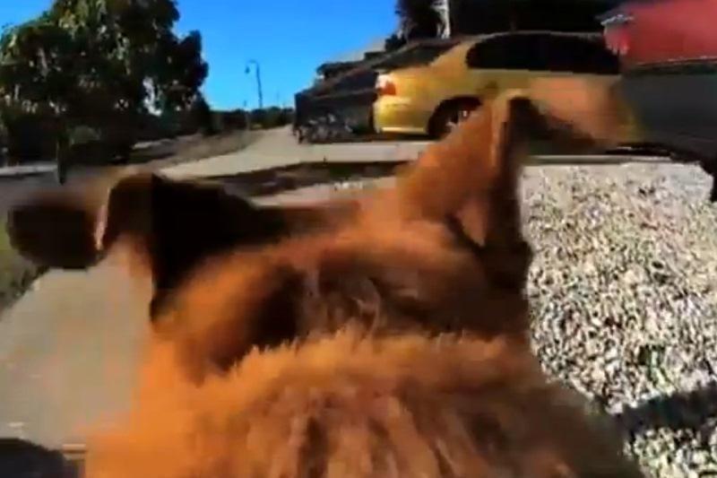 Šunų mylėtojams: slaptų augintinių pasivaikščiojimų atskleidėjas