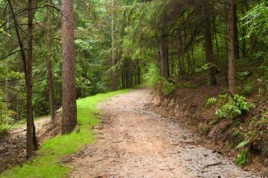 Studentai patrauks į miškus