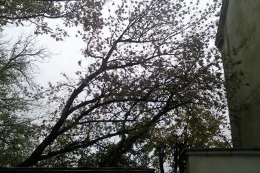 Kas sutvarkys nulūžusius medžius?