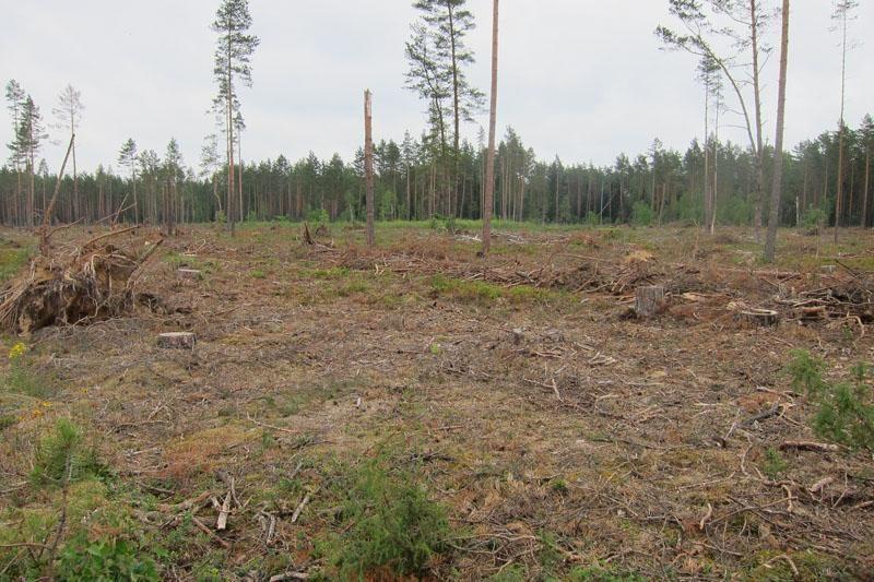 ES parama skatina greičiau atkurti pažeistus miškus