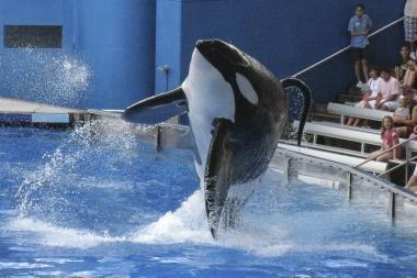Mokslininkai: vieno banginio kąsnio užtektų 200 žmonių