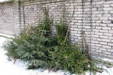Vilniečiai kalėdines eglutes skyrė namų šilumai