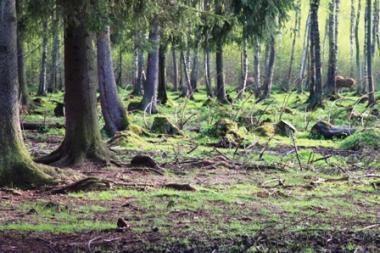 Miškininkai pasisako prieš miškų skaidymą ir privatizavimą