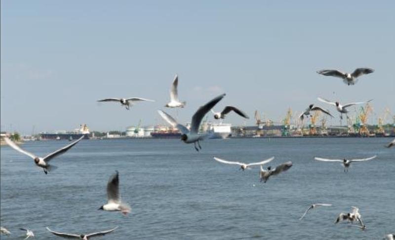 Prieš paukščius uostas griebėsi garsiakalbių