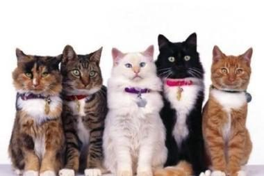 Į Vilnių atvyksta vienintelis pasaulyje kačių teatras