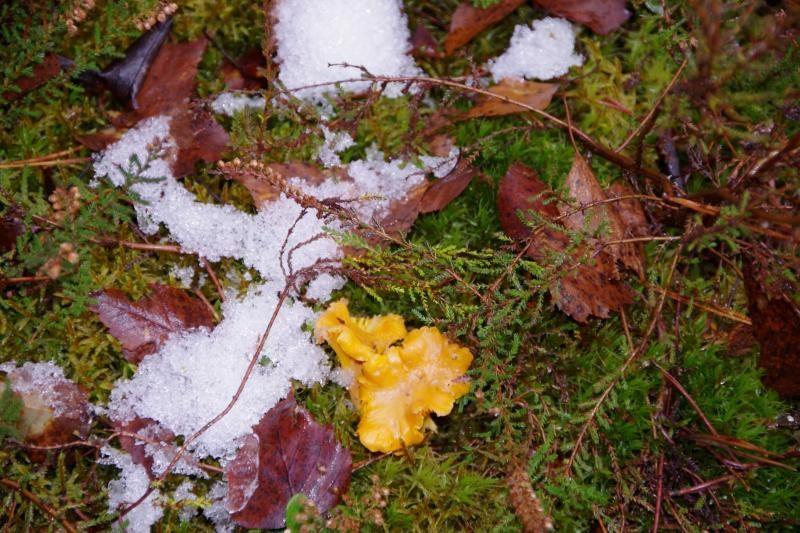 Lietuvos miškuose jau dygsta grybai – pavasario pranašai