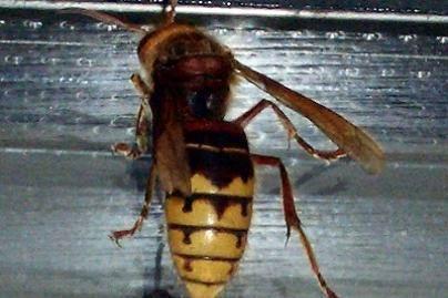 Kada iš tikrųjų verta panikuoti dėl vabzdžio įkandimo?