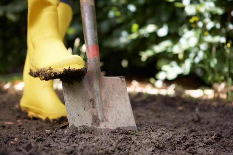 Daržoves auginęs marijampolietis praturtėjo beveik 800 tūkst. litų