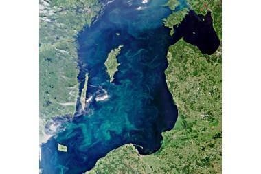 """""""Žydinti"""" Baltijos jūra sunerimti privertė ne tik aplinkosaugininkus"""