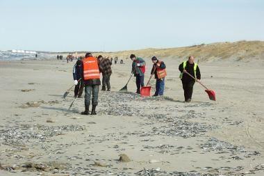 Talkininkai jau surinko Smiltynėje nugaišusias žuvis