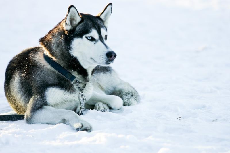 Psichologė: gyvūnus kankina itin agresyvūs žmonės