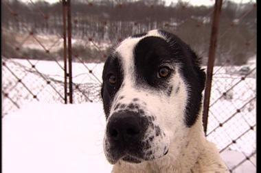 A.Baukutė pranešė, kad pavogtas jos skandalingas šuo