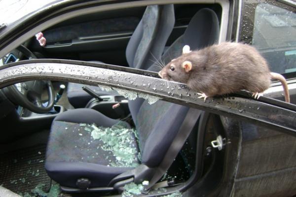 Nuo vagių nukentėjo Rumunijos ambasados automobilis