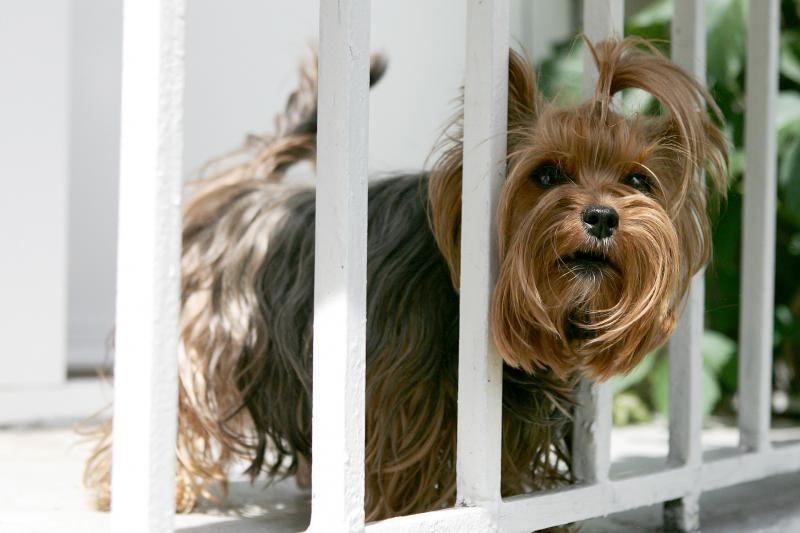 Iš Garliavos gyventojo atimti šunys laukia teismo verdikto