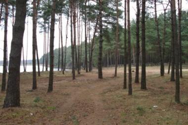 Nelegalūs buvusio Vilniaus policijos vadovo pastatai sulyginti su žeme