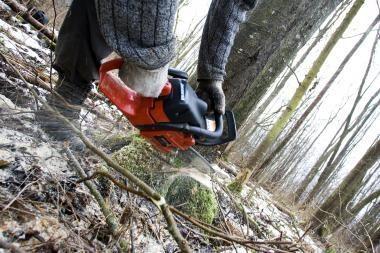 Miškininkai peikia miškų privatizavimo idėją