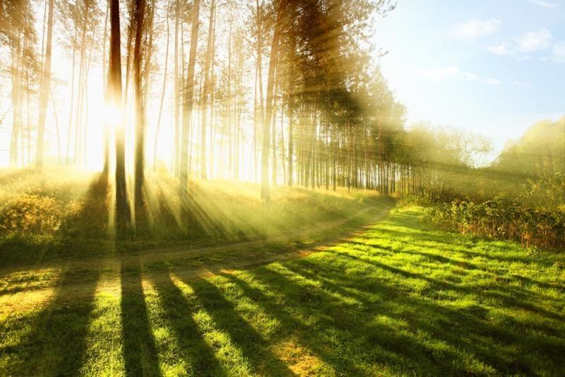 Šeštadienį pasodintas  Europos miškas