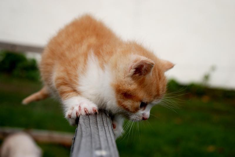 Kas sakė, kad katės nemėgsta vandens?